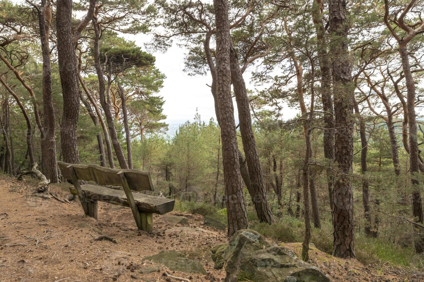 Old wooden bench stands under coniferous trees on a hill overlooking a valley photo
