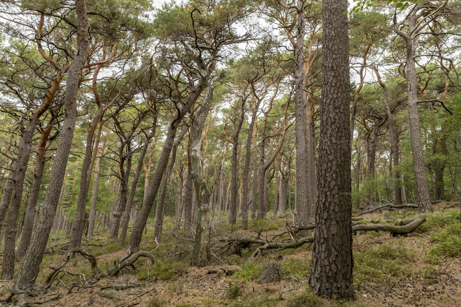 View over a wooded valley with pines and deciduous trees photo