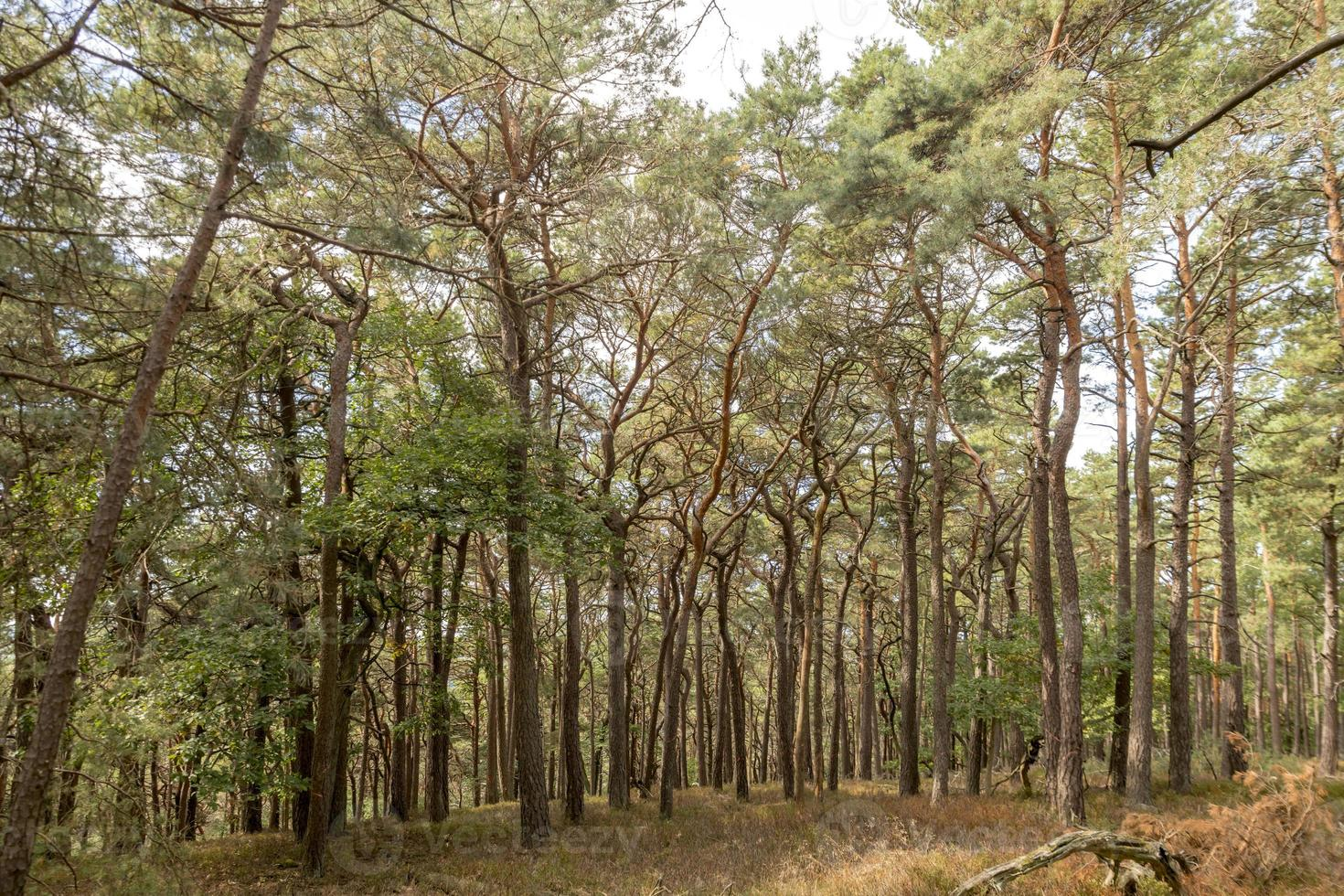 Vistas a un valle arbolado con pinos y árboles de hoja caduca en otoño foto