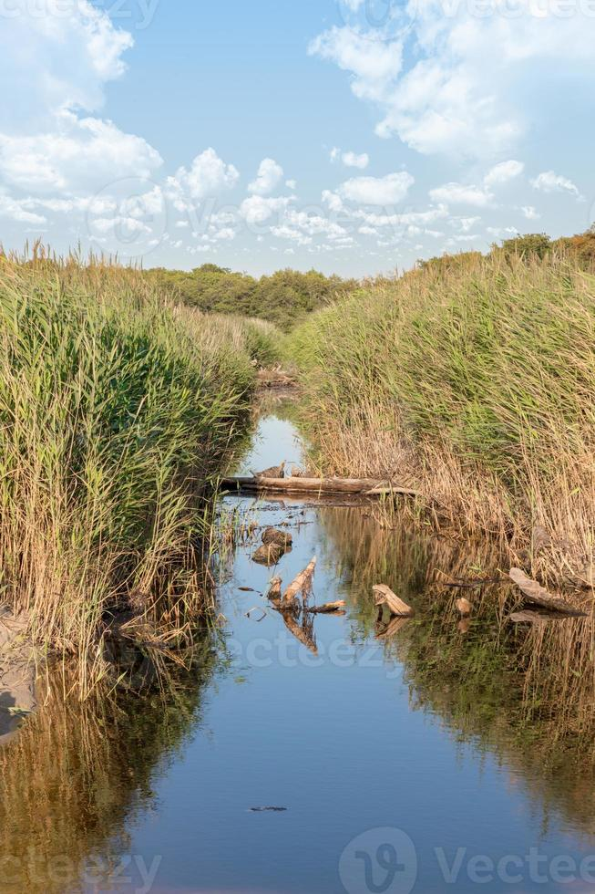 Drainage canal on the Baltic Sea coast near Darss in Germany with reeds and grass photo