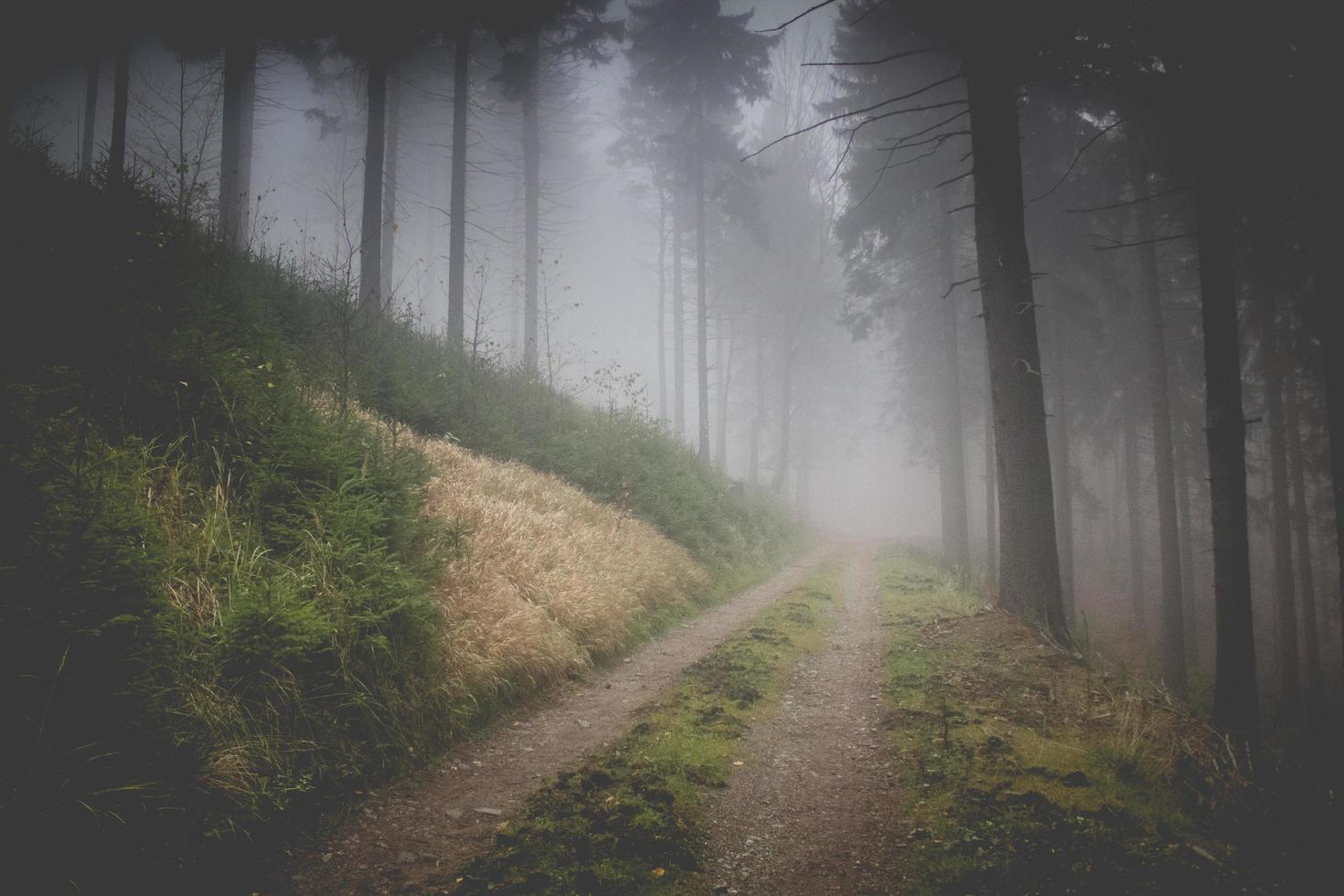 camino brumoso del bosque foto
