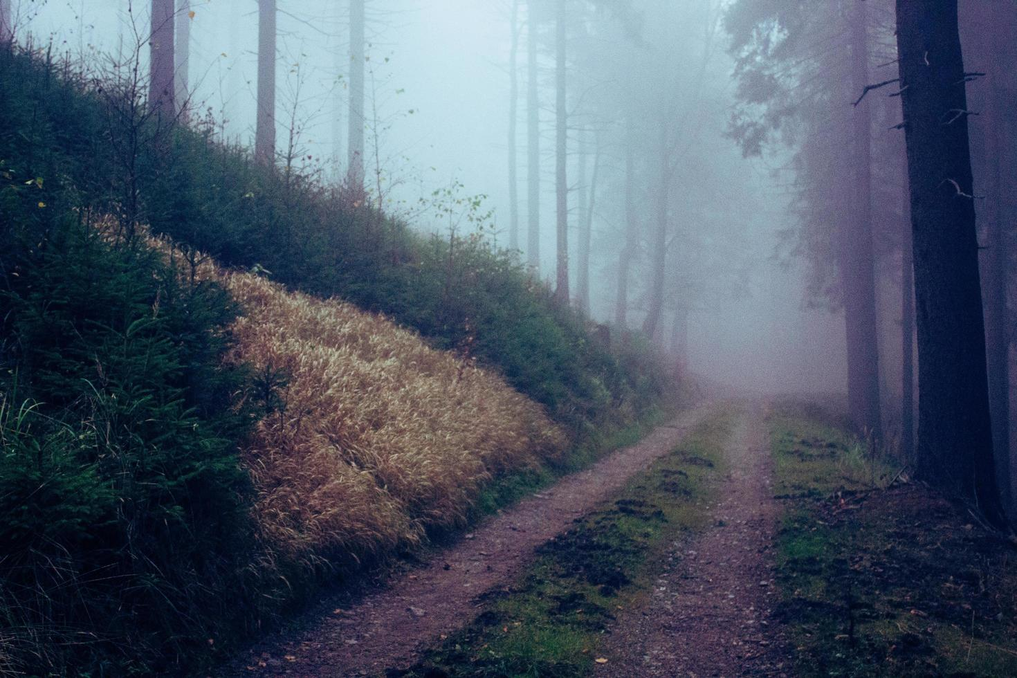 Empty footpath in forest photo