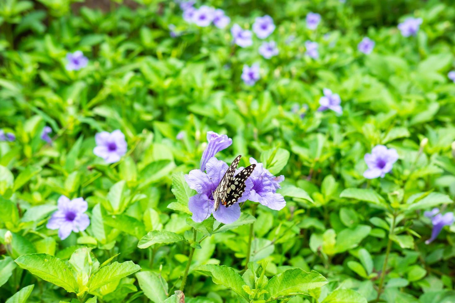 mariposa posada sobre una flor violeta foto