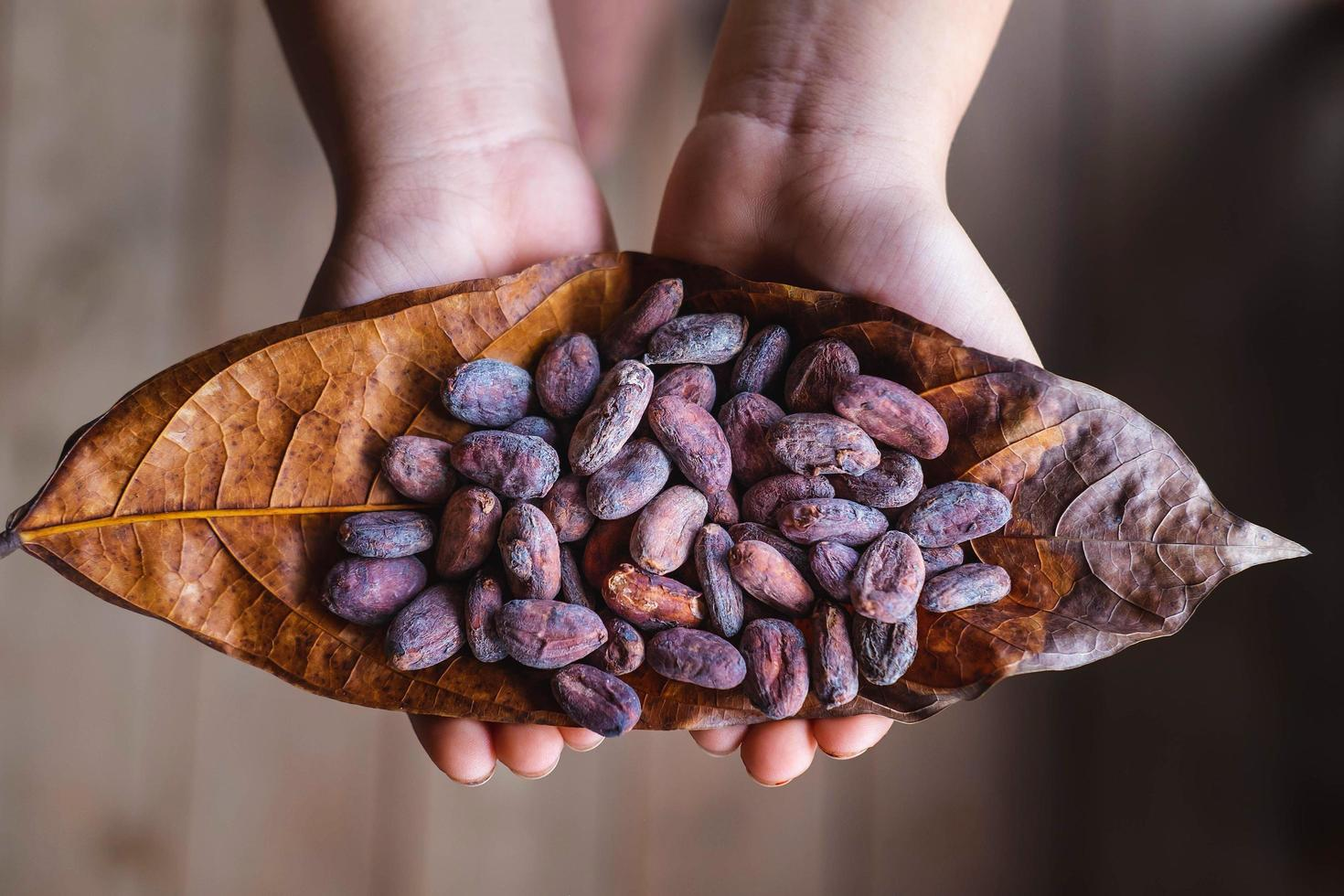 Dried cocoa beans on cocoa leaves photo