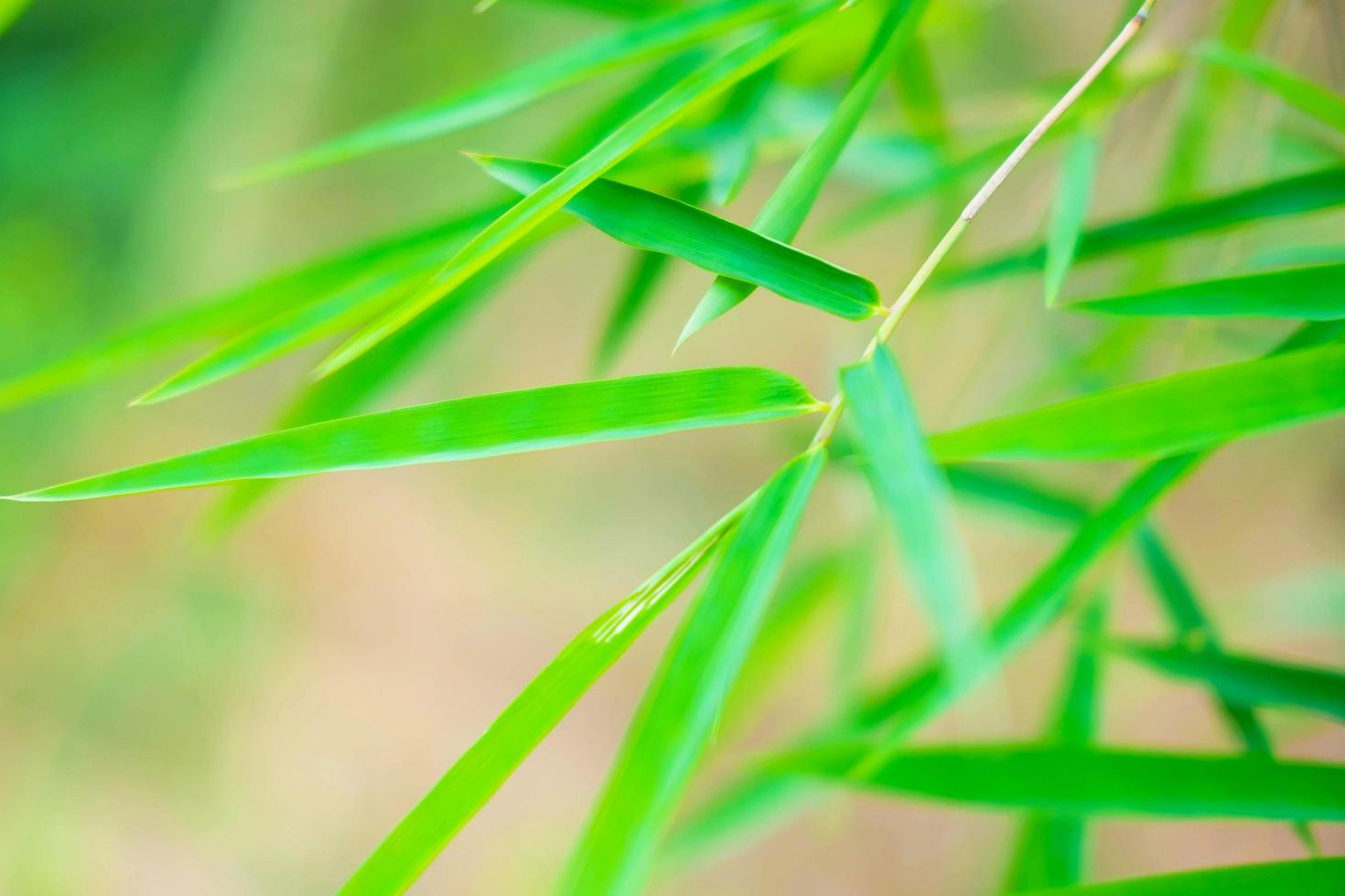 fondo de hoja de bambú foto