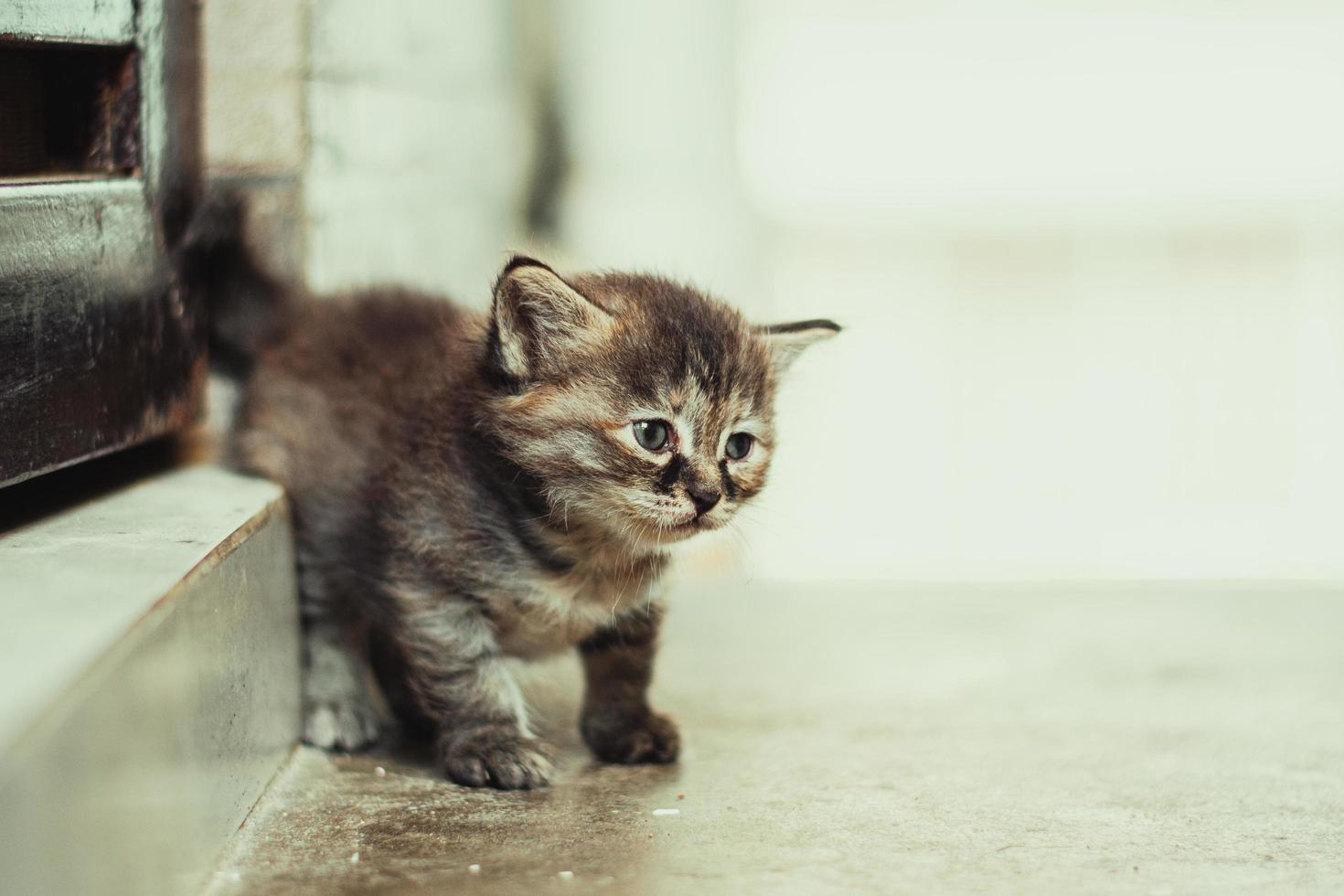 Brown tabby kitten on brown wooden table photo