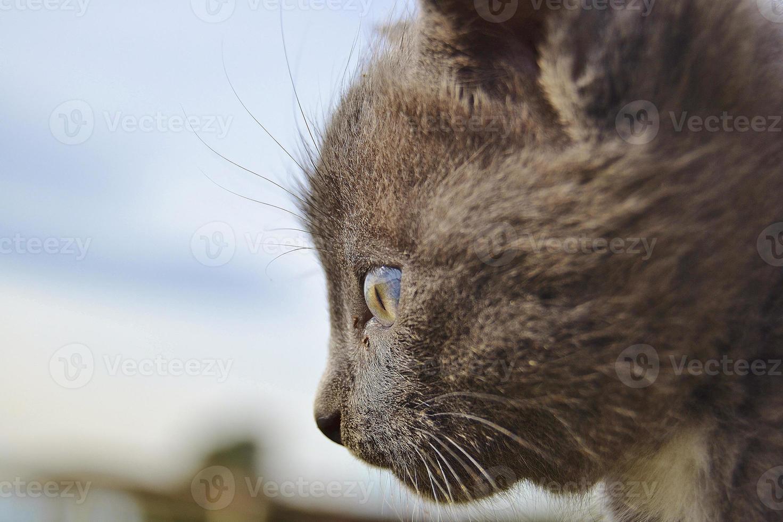 Thoughtful cat portrait photo