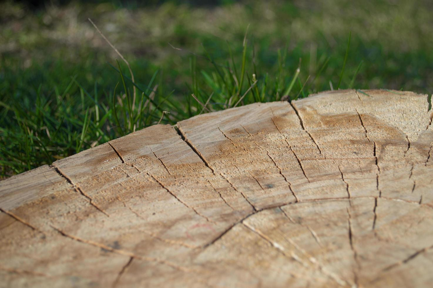 Stump closeup with green grass photo