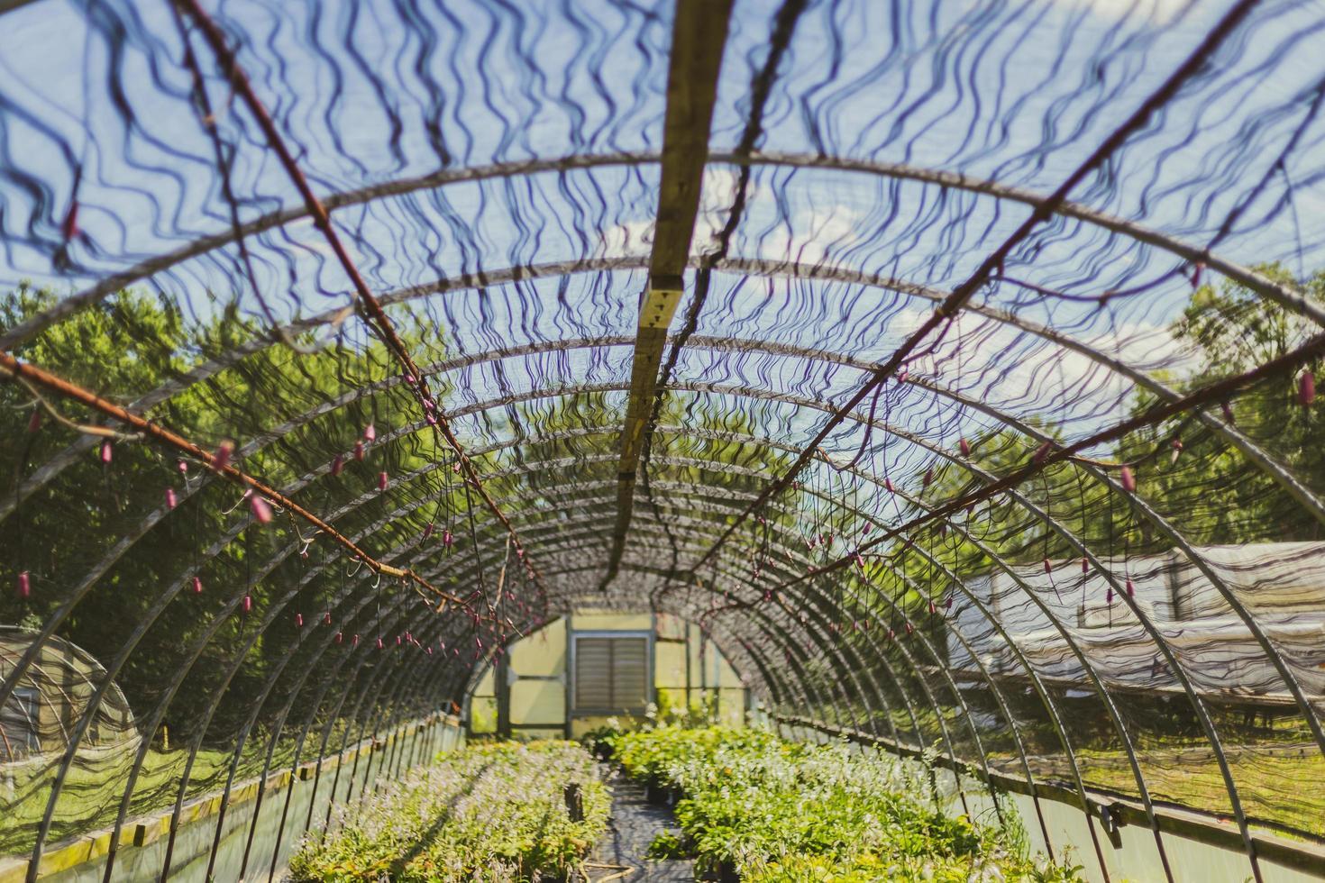 hermoso techo de invernadero foto