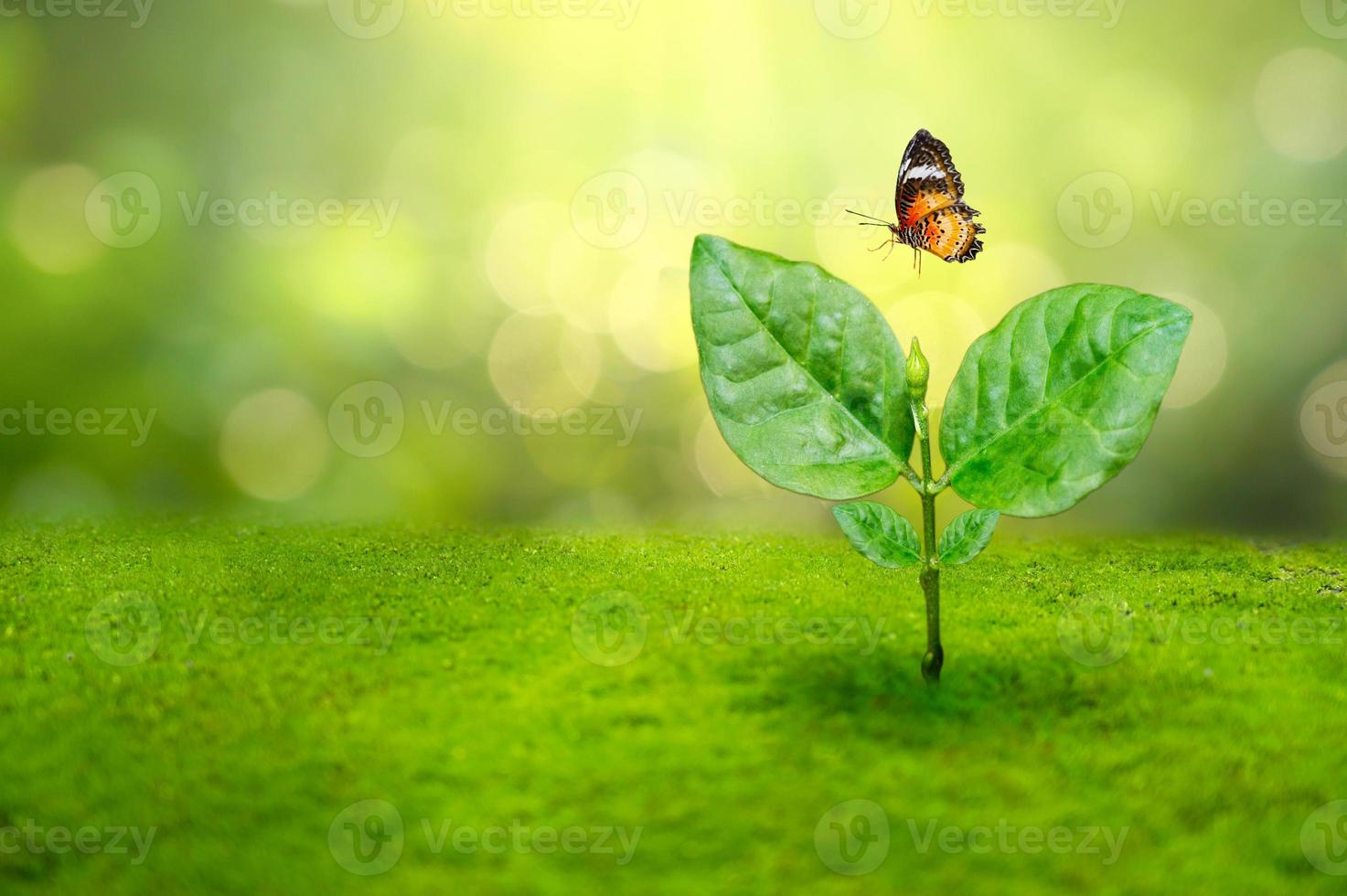 Plant seedling and a butterfly in the morning light on nature background photo