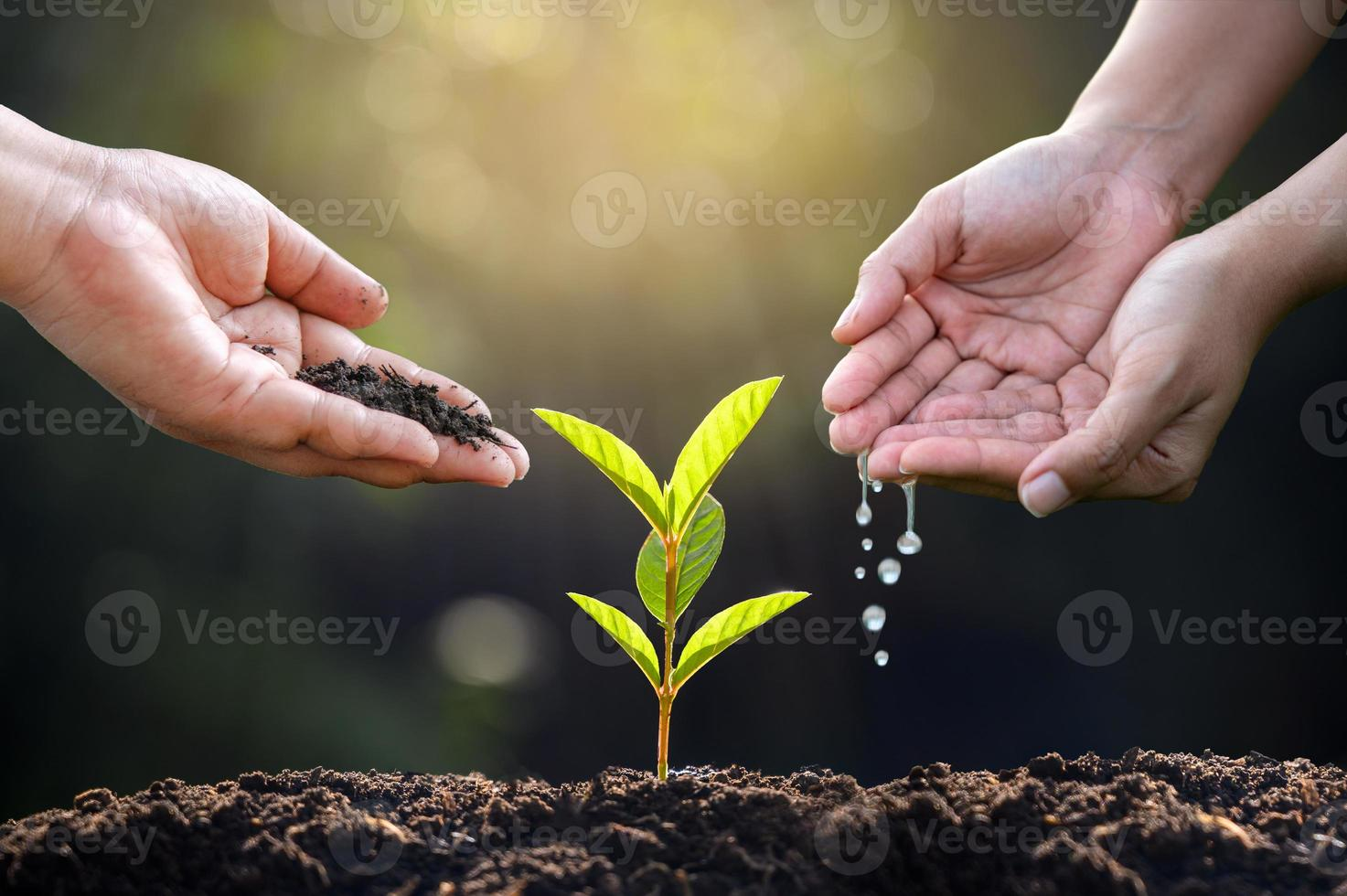 Hands watering plants on green background photo