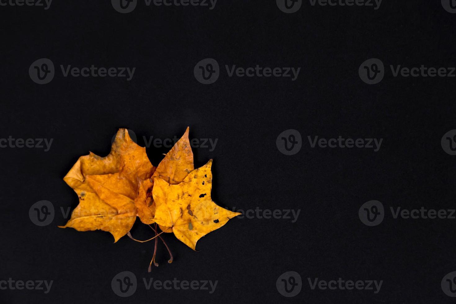 Three yellow leaves on black background photo