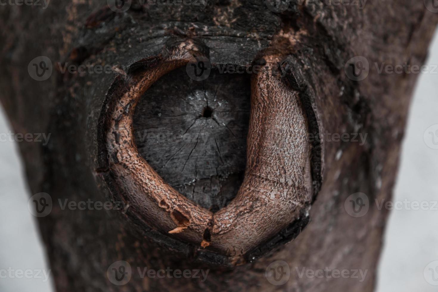 textura de corteza de árbol con un nudo circular foto