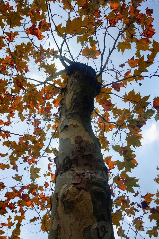 árboles con hojas marrones en la temporada de otoño foto