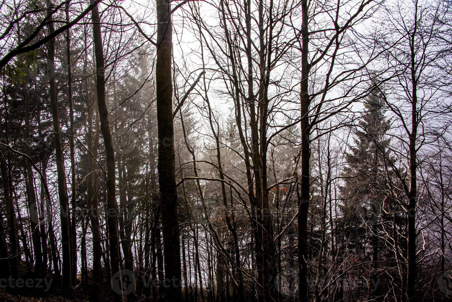 autumn forest with fog photo