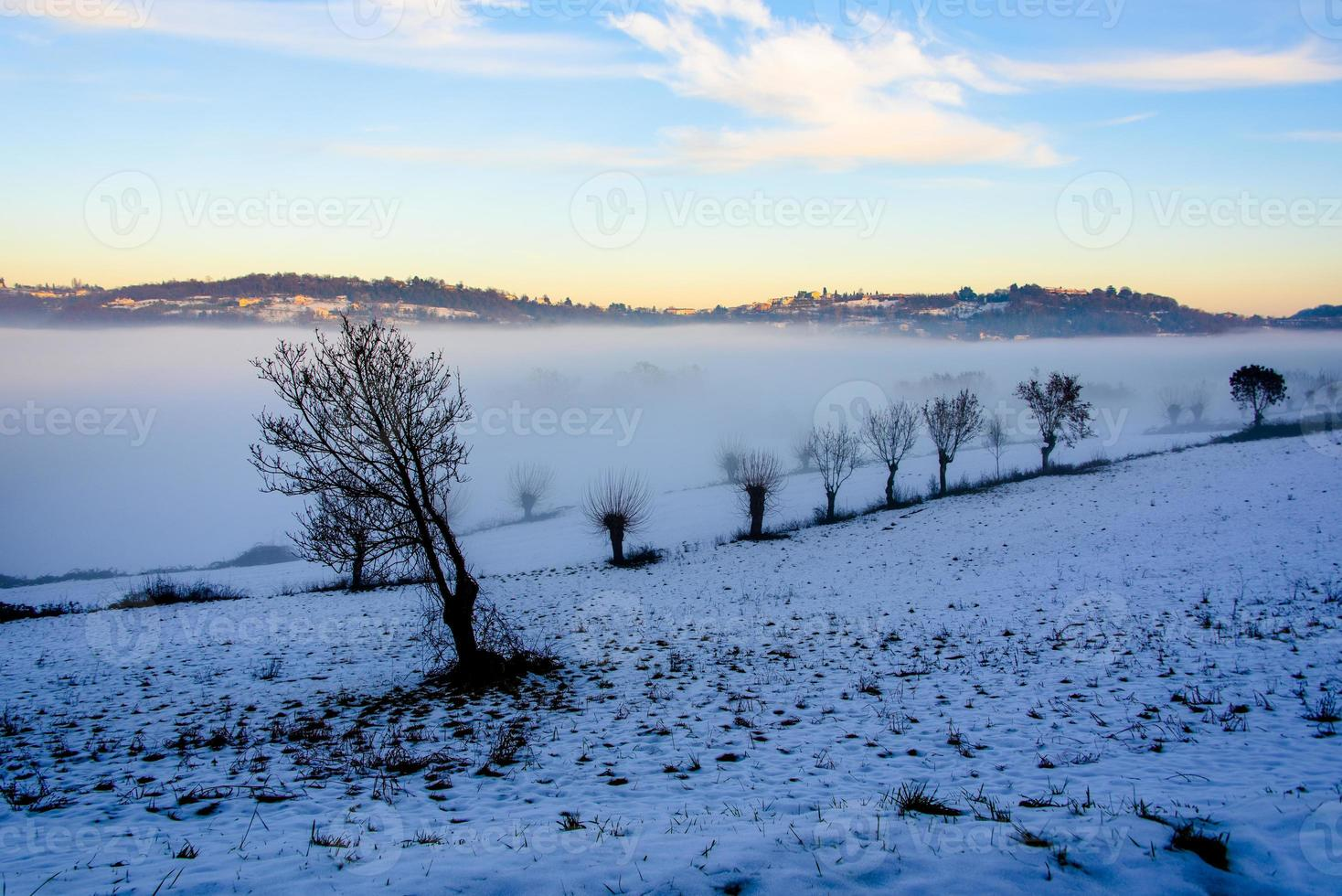 trees between snow and fog photo