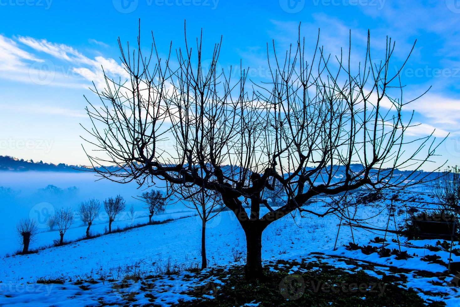 tree among the snow photo