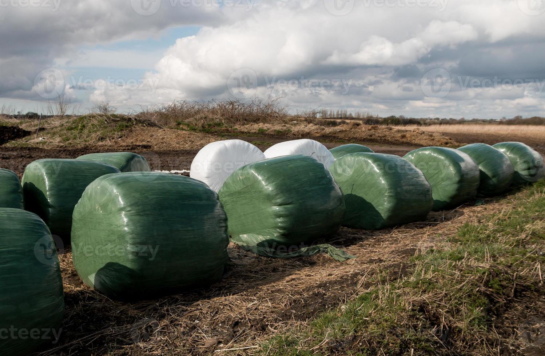 Green Feed Bags photo