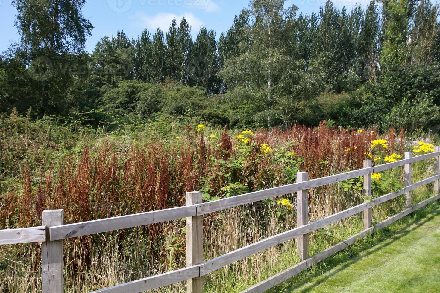 fence and bushes photo