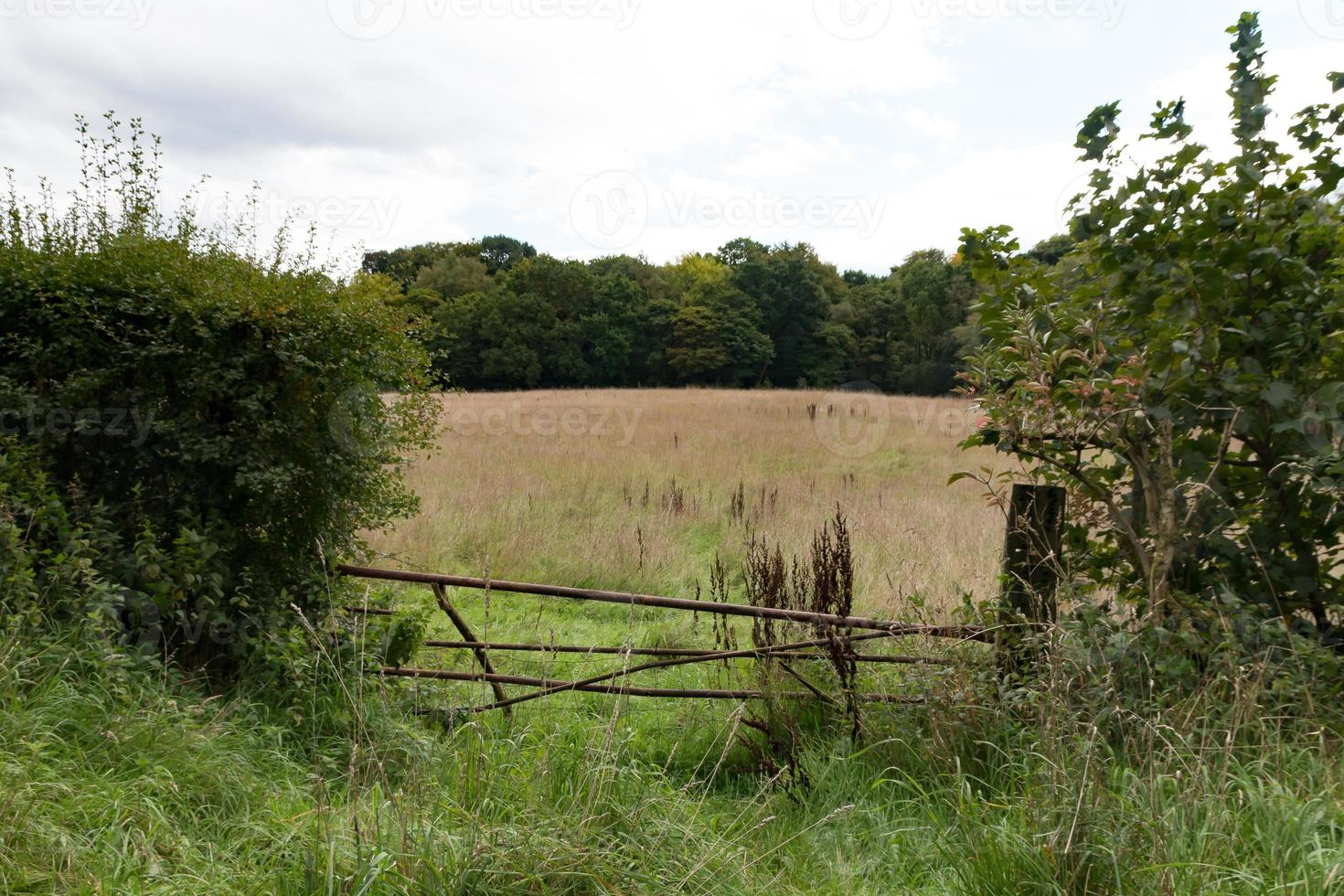 Field with Gate photo