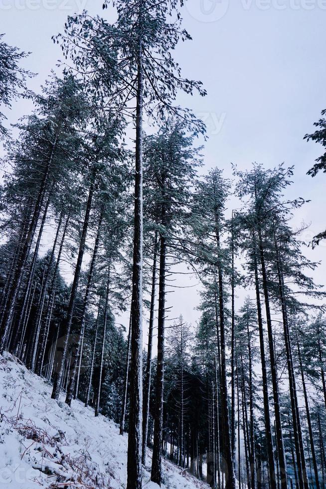 nieve en la montaña en temporada de invierno foto