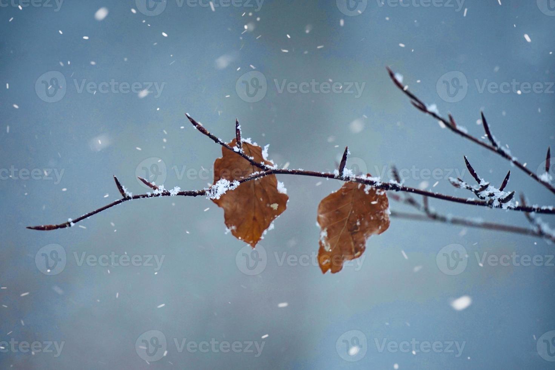 nieve en los plats en la temporada de invierno foto