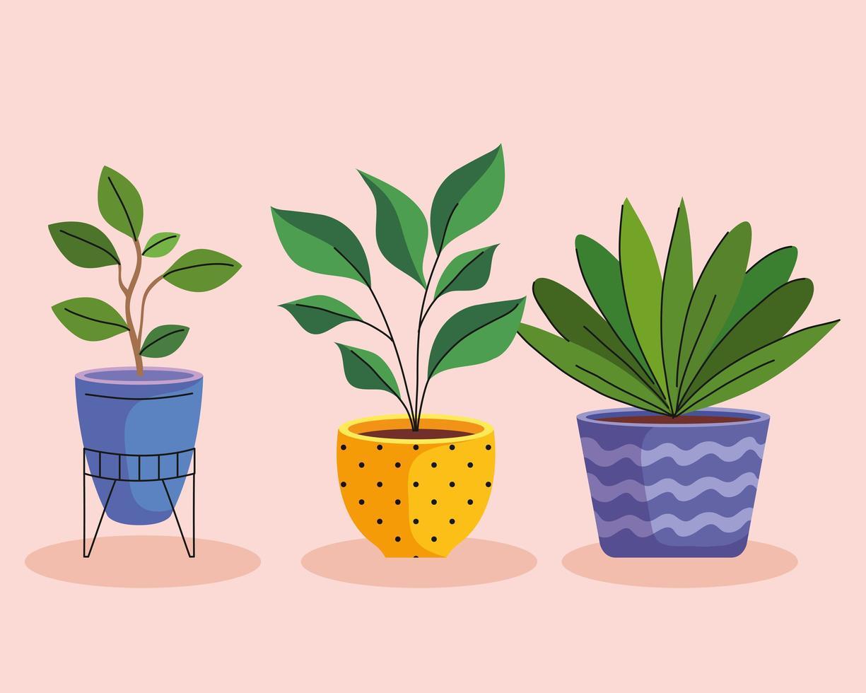 bundle of three house plants in ceramic pots vector
