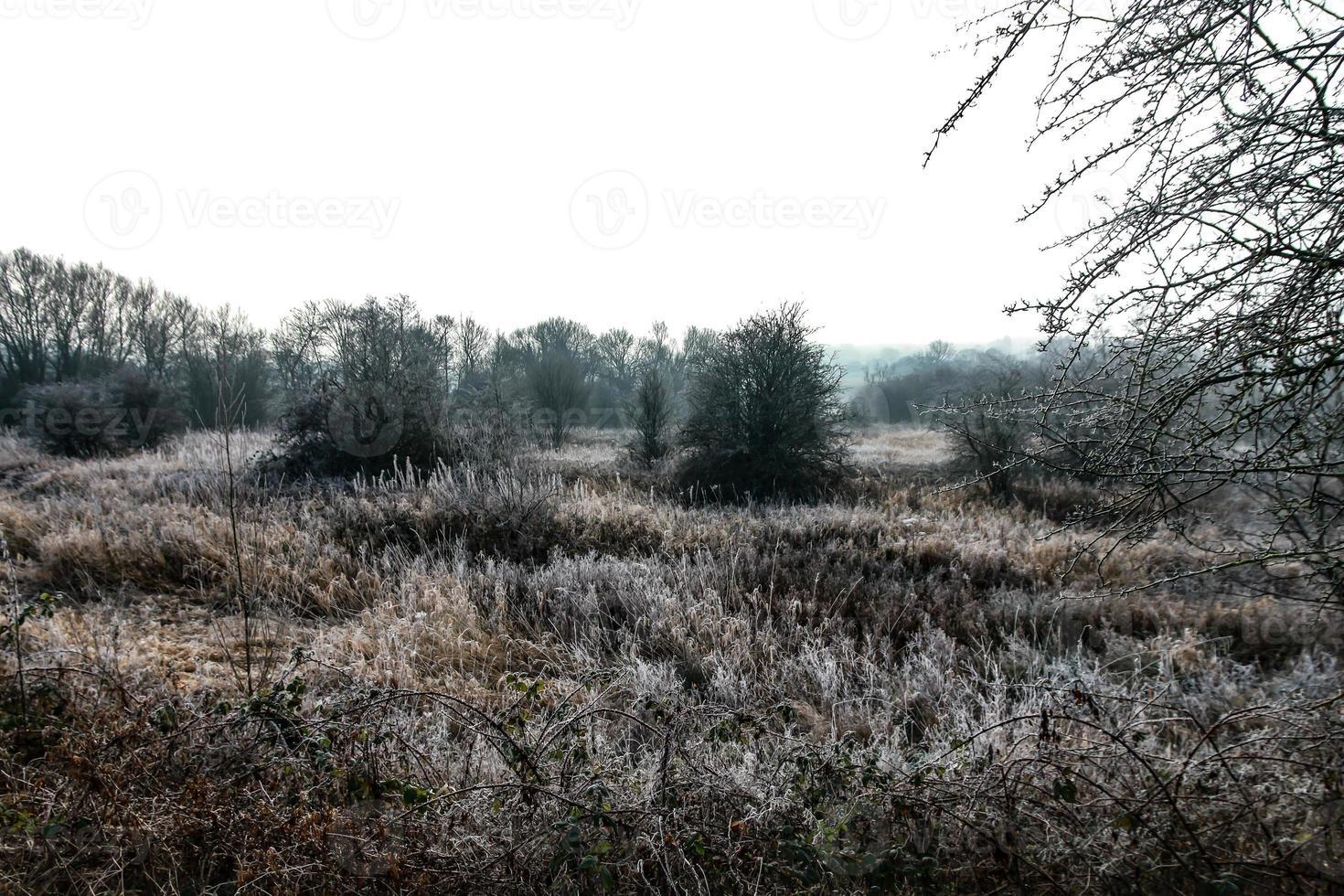 cold winter field photo