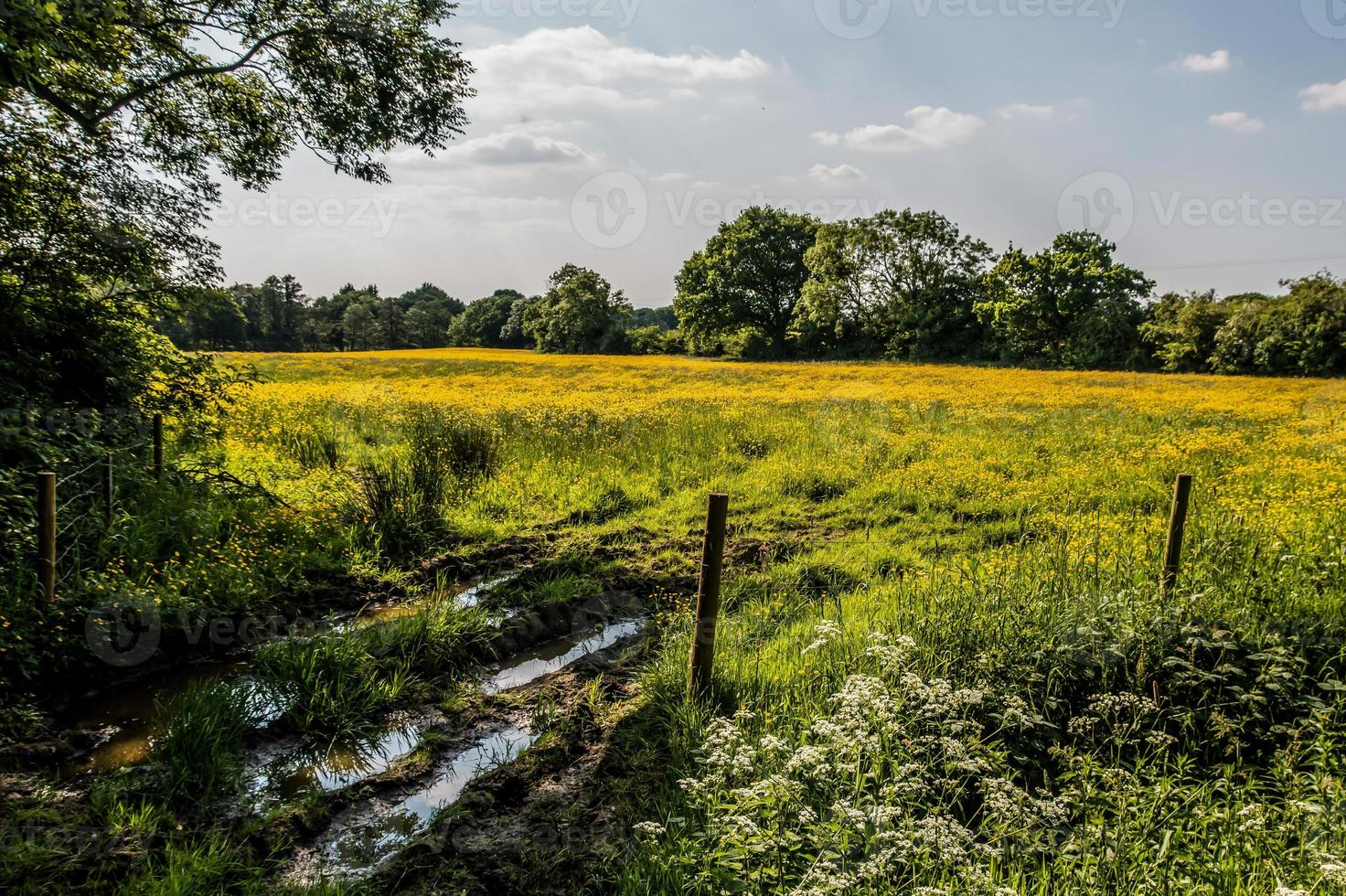 Yellow Meadow and Fence photo