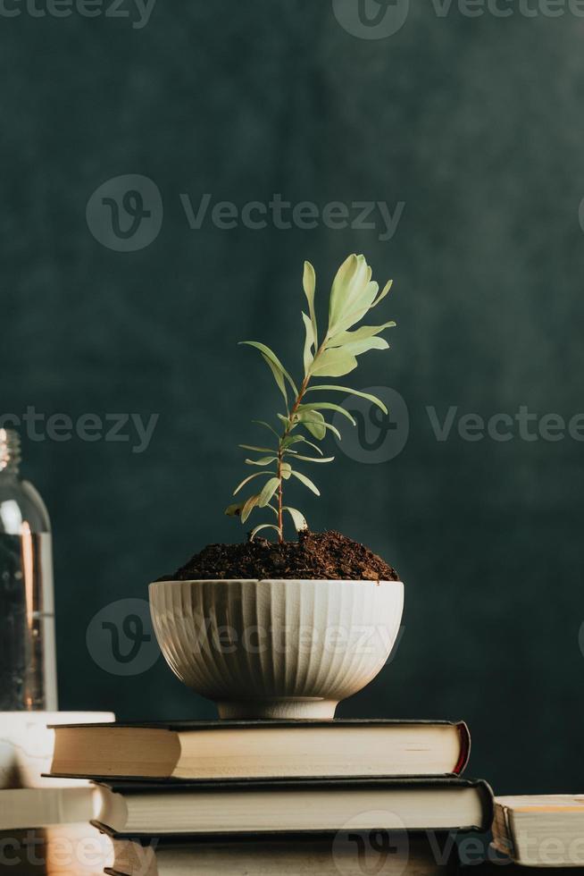Una foto minimalista de una planta que crece en una maceta con agua y libros.