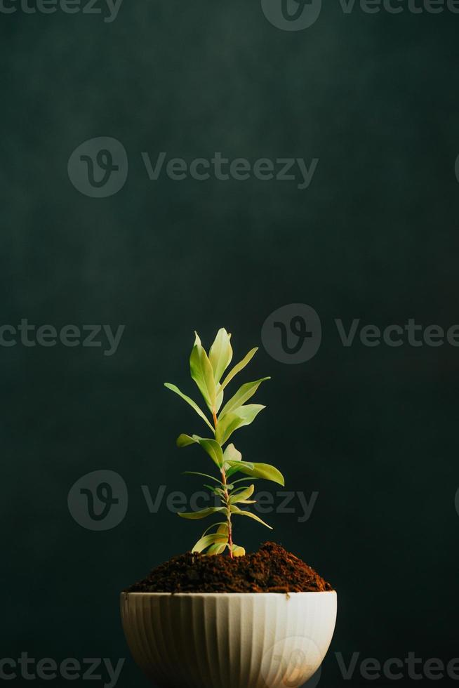 Close-up of a growing plant in a pot with a dark background photo