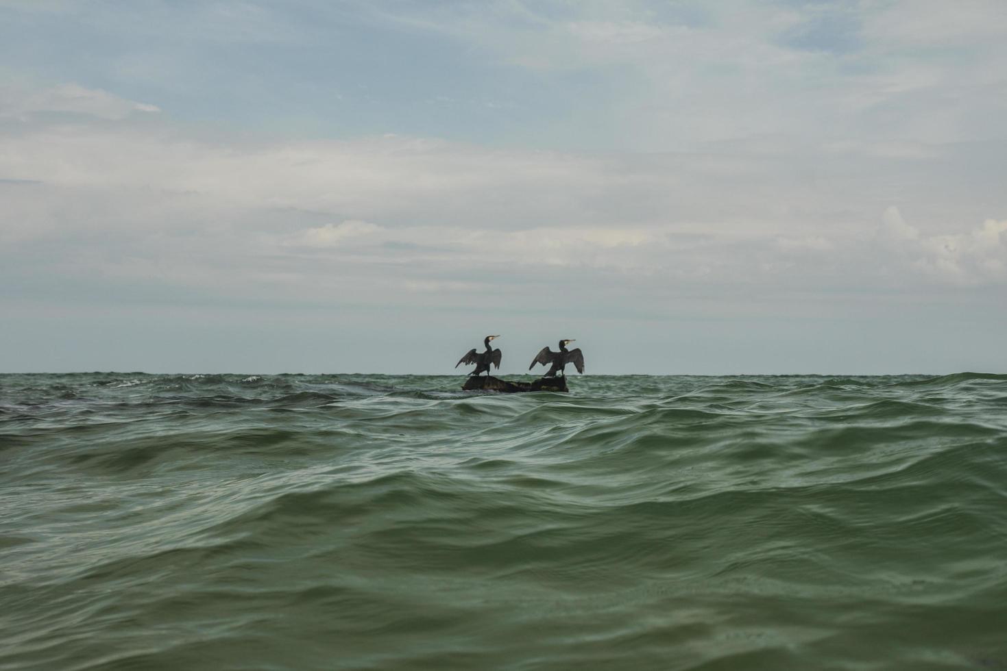 dos cormoranes secan sus alas en una piedra en medio del mar foto