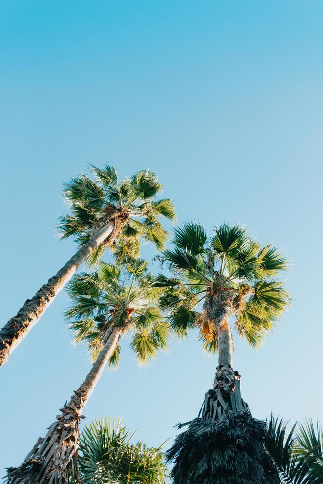 Tres palmeras sobre un cielo azul profundo durante un día soleado foto