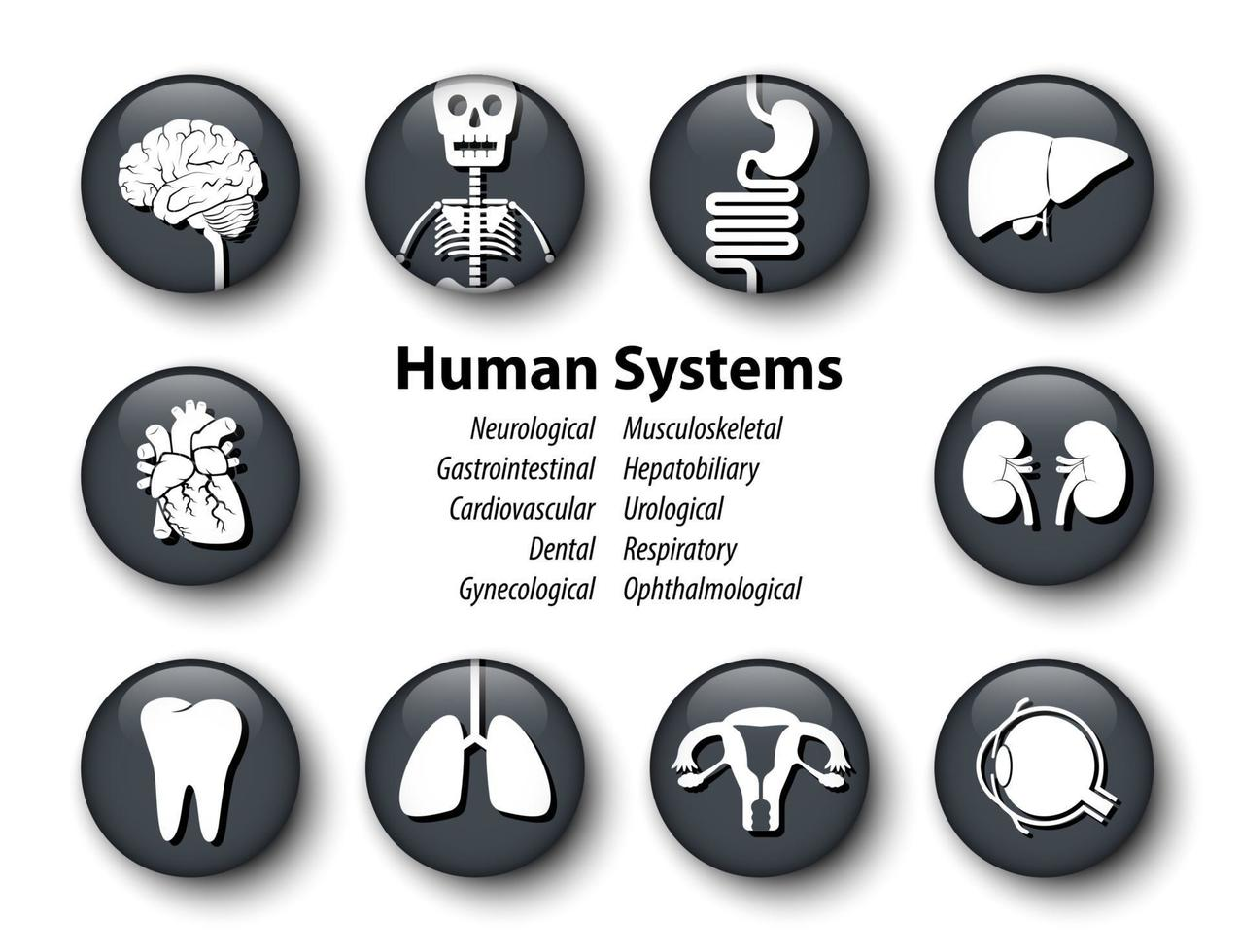Set of human systems icon  Round glass cover design  Vector