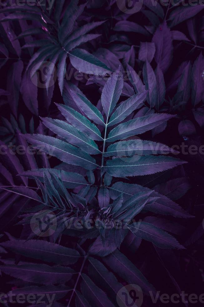 blue plant leaves in the nature in springtime photo