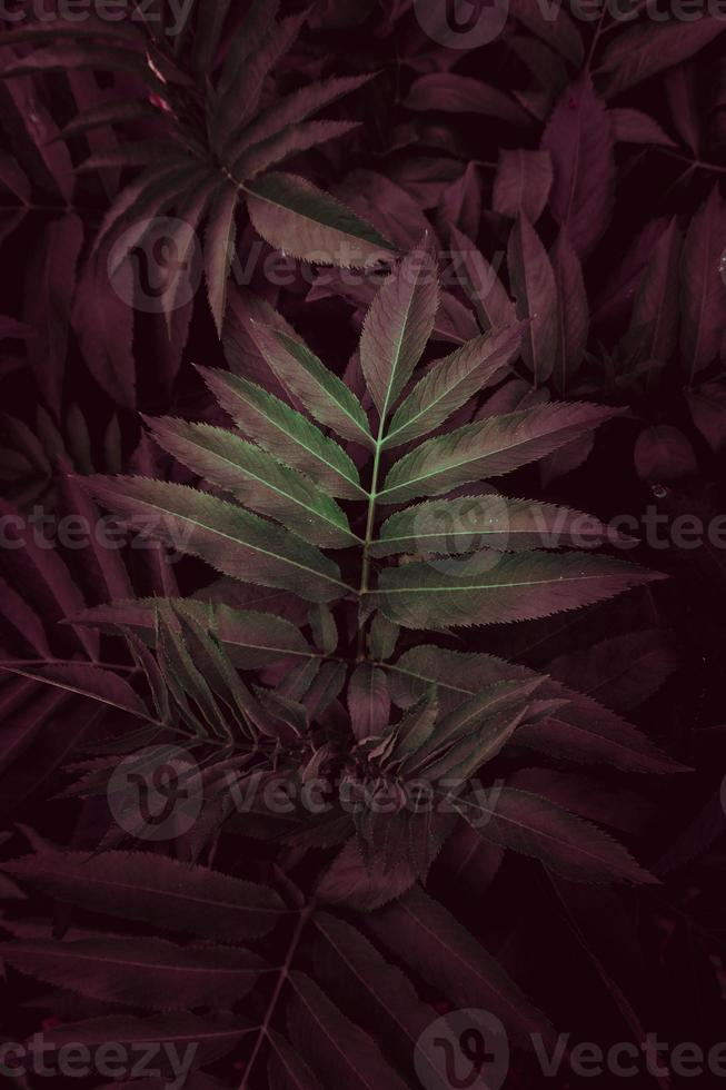 green and red plant leaves photo