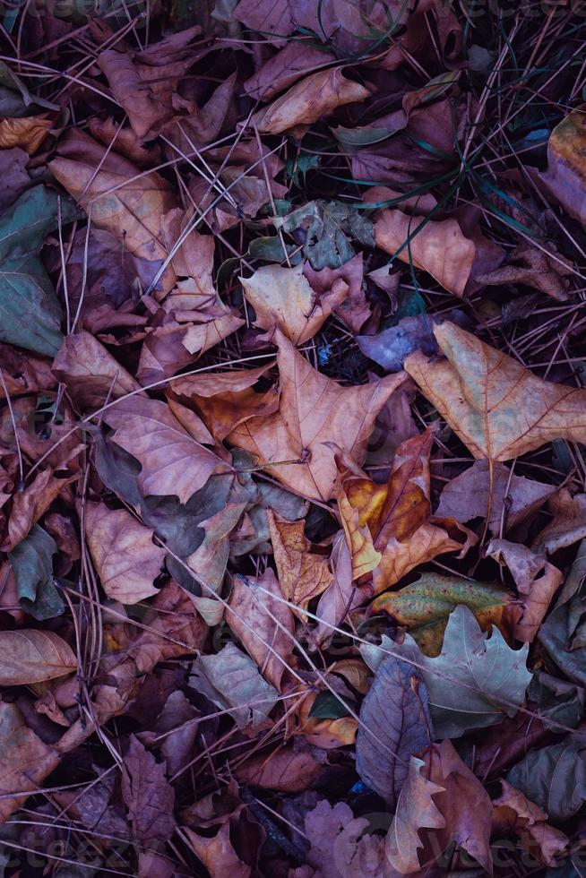 multicolored dry leaves on the ground photo