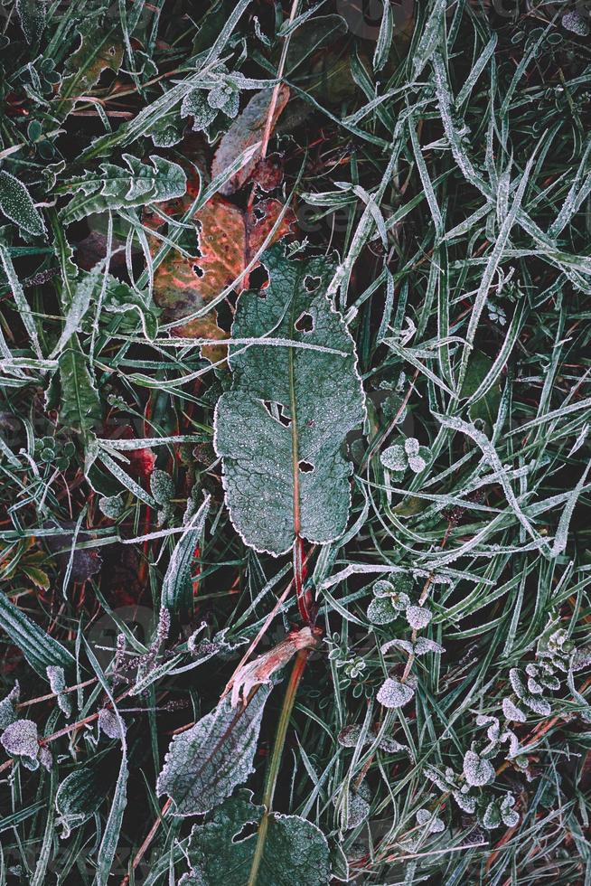 hojas verdes congeladas en temporada de invierno foto