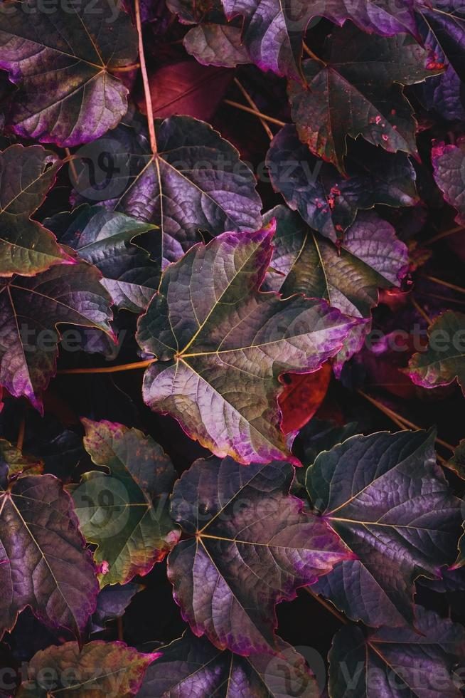 multicolored leaves textured background photo