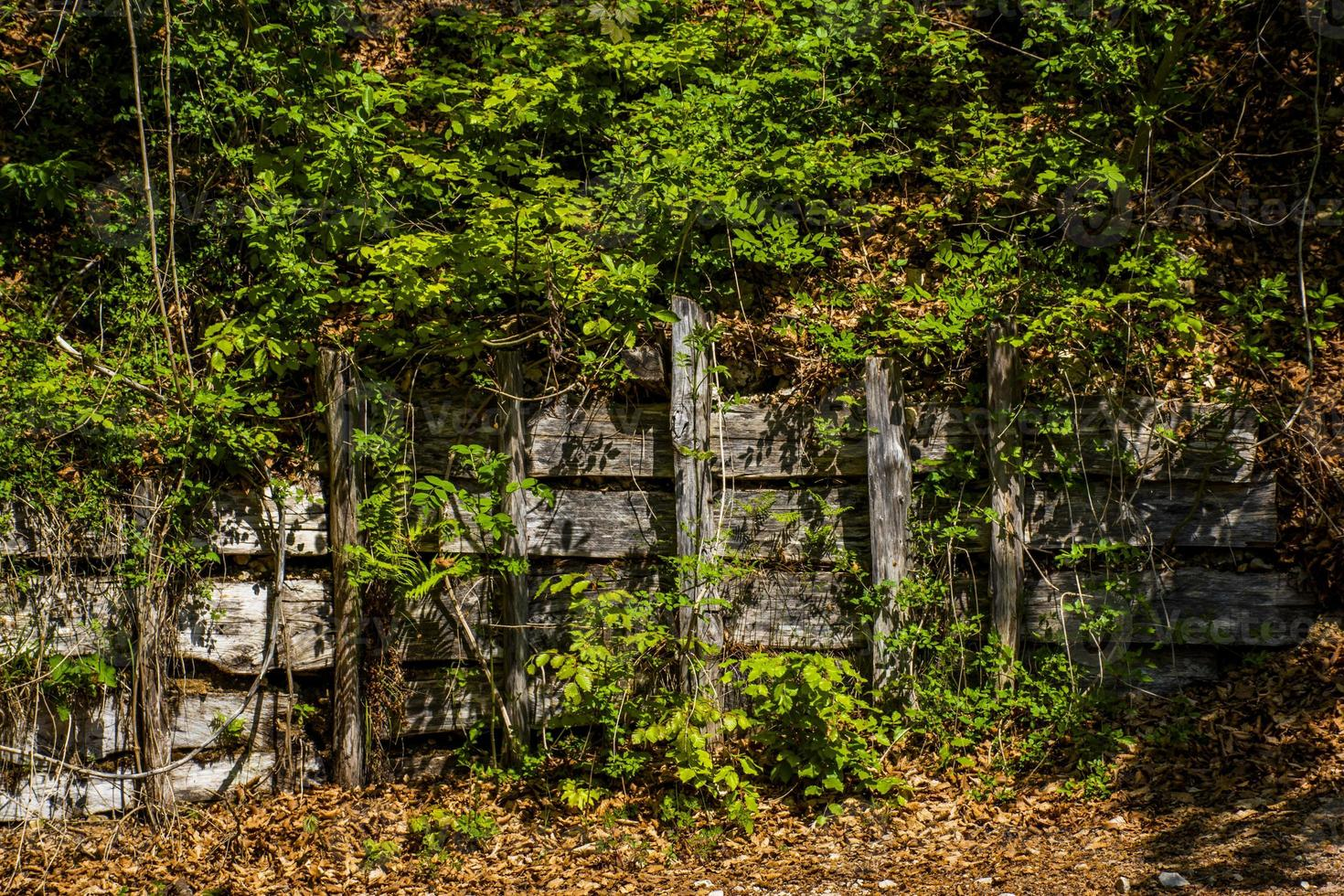 Wooden fence covered in greenery photo