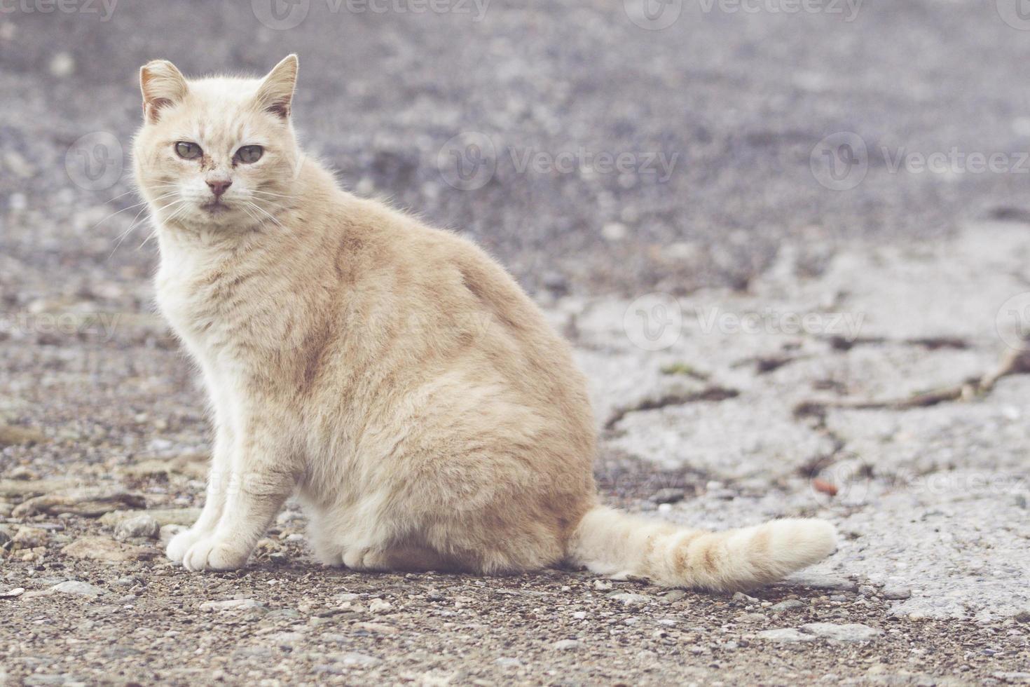 gato callejero ligero foto