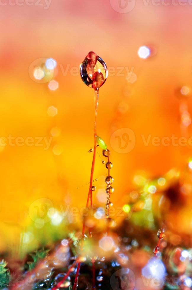 gotita hierba fondo naranja morado foto
