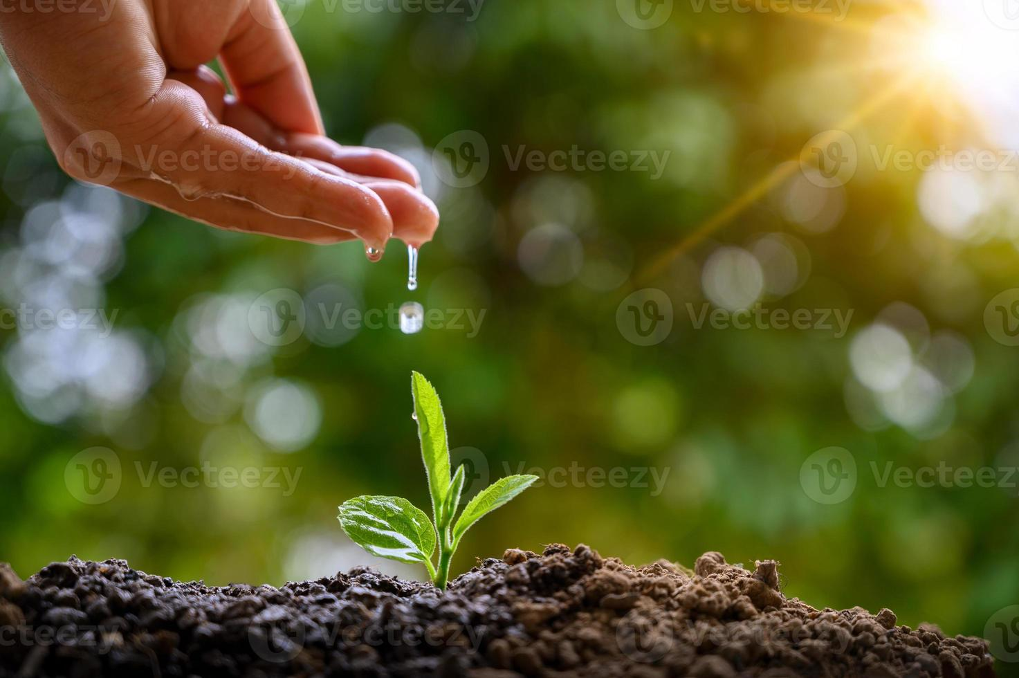 In the hands of trees growing seedlings. Bokeh green Background Female hand holding tree on nature field grass Forest conservation concept photo