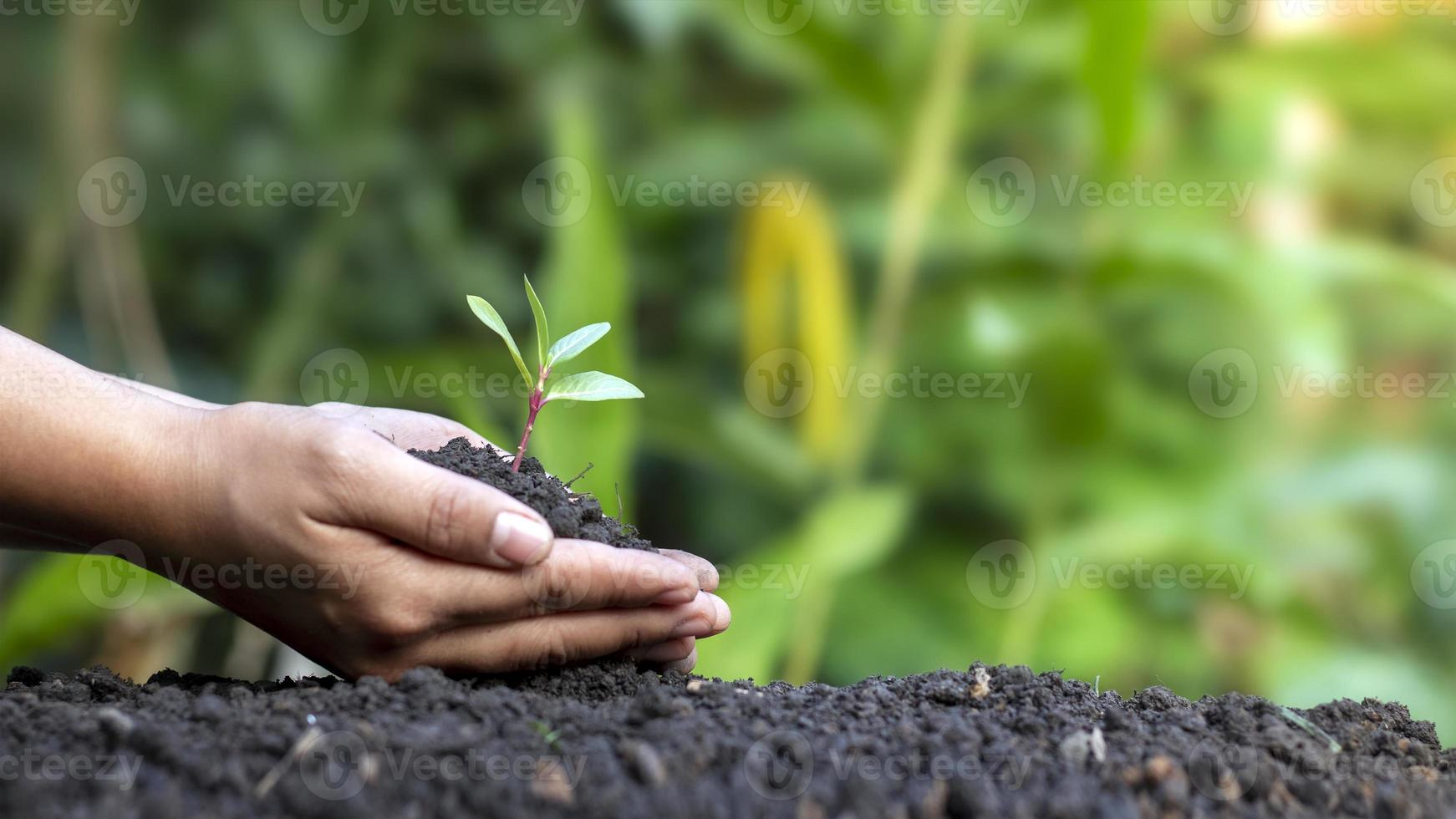 World environment day concept with girl holding small trees in both hands to plant in the ground. photo