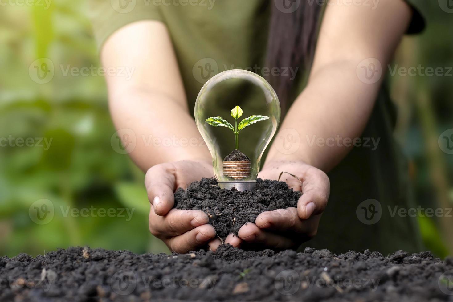 un arbolito que crece sobre una moneda de plata y bombillas de bajo consumo, un concepto de ahorro energético y una energía limpia respetuosa con el medio ambiente. foto