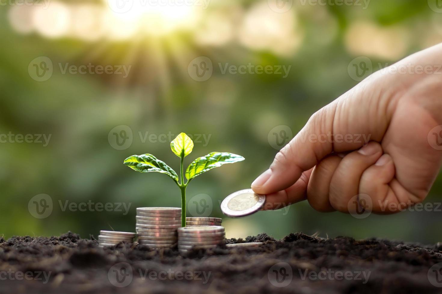 árbol con hojas verdes que crecen a partir de monedas y fondo verde natural borrosa concepto de gestión de dinero y finanzas para pyme. foto