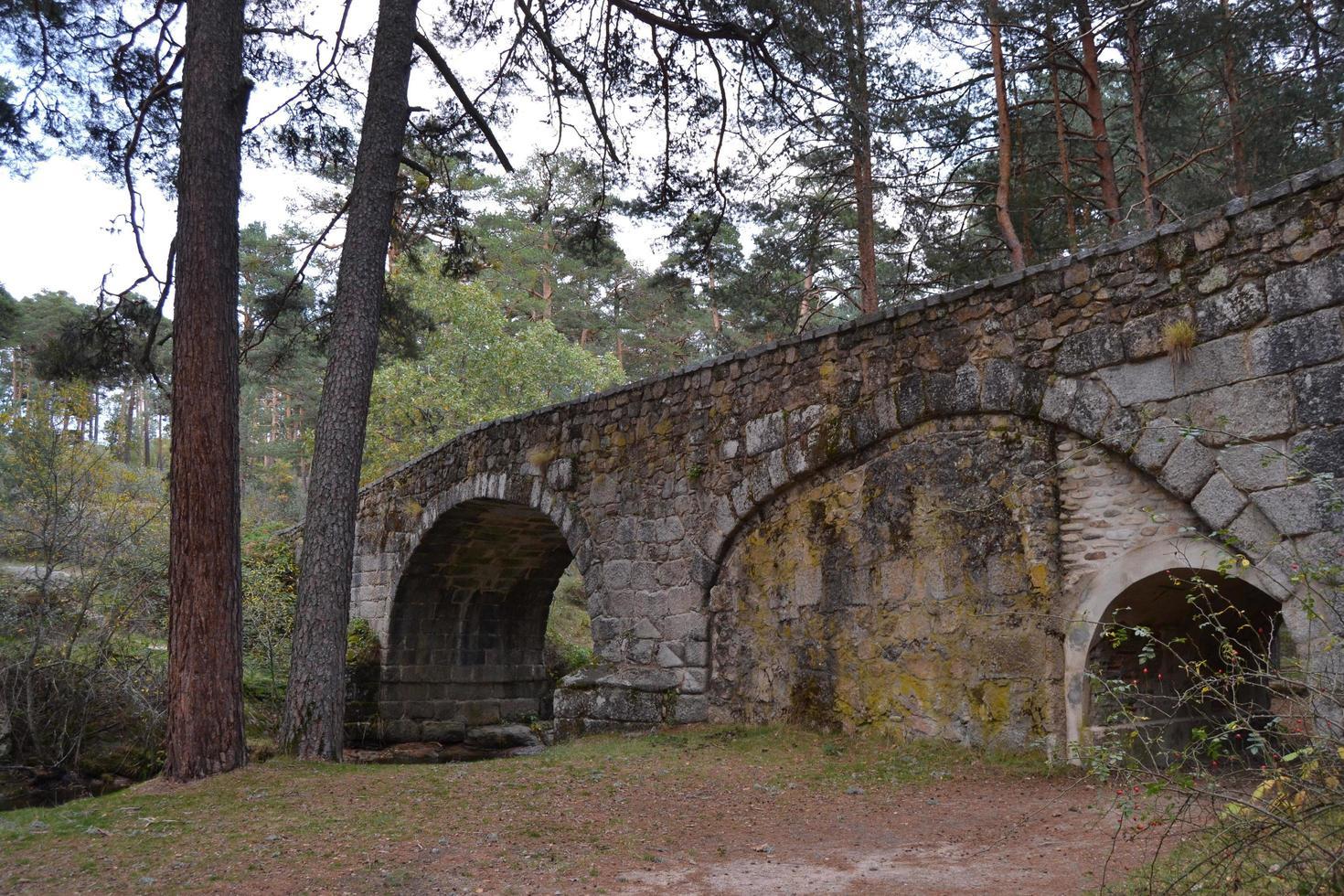 puente de piedra en un camino de un bosque foto