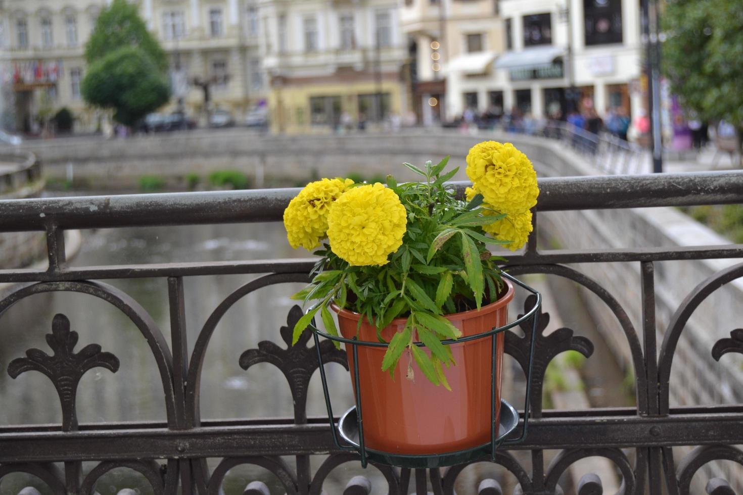 flores amarillas en una maceta foto