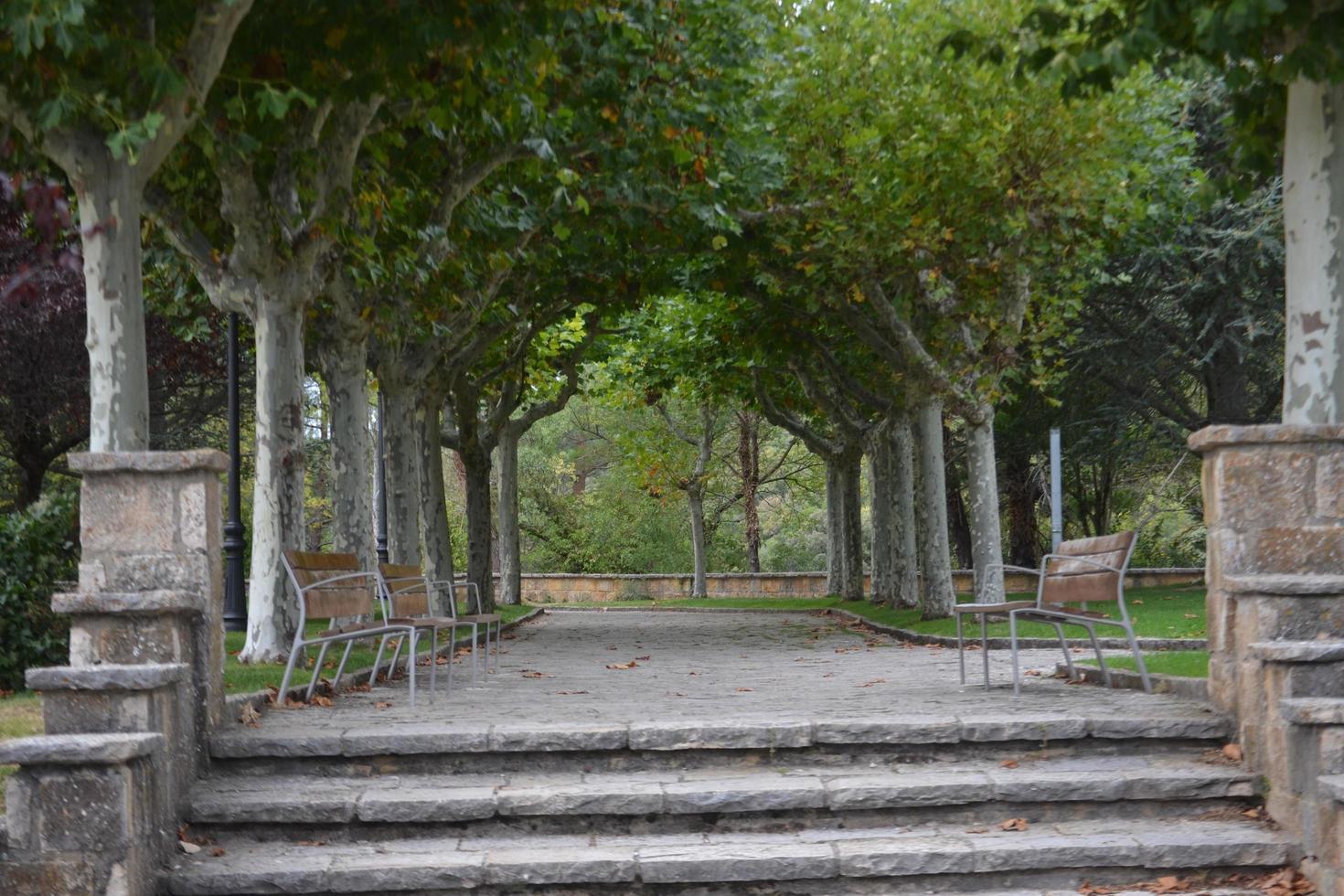 el parque con los arboles foto