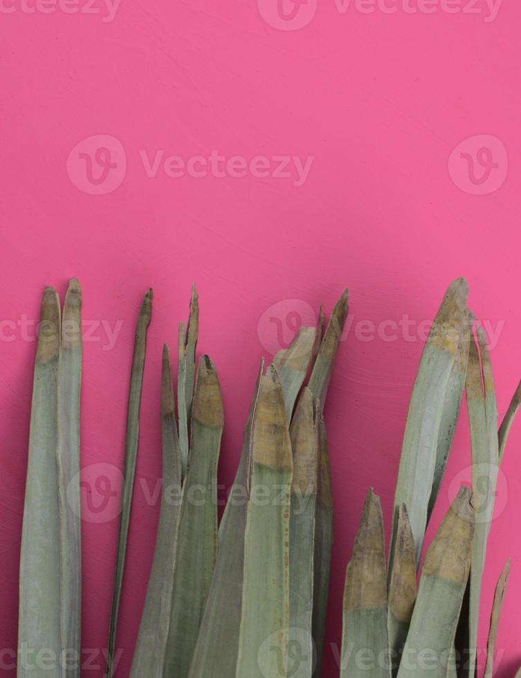 Hermosas hojas de palma secas planas yacen sobre fondo de textura abstracta de acuarela rosa acrílico. foto